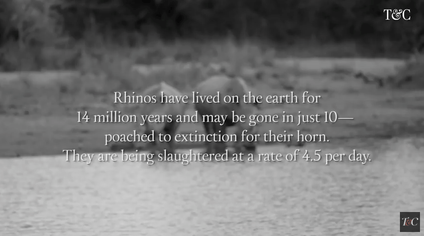 save rhinos by wilderness safaris