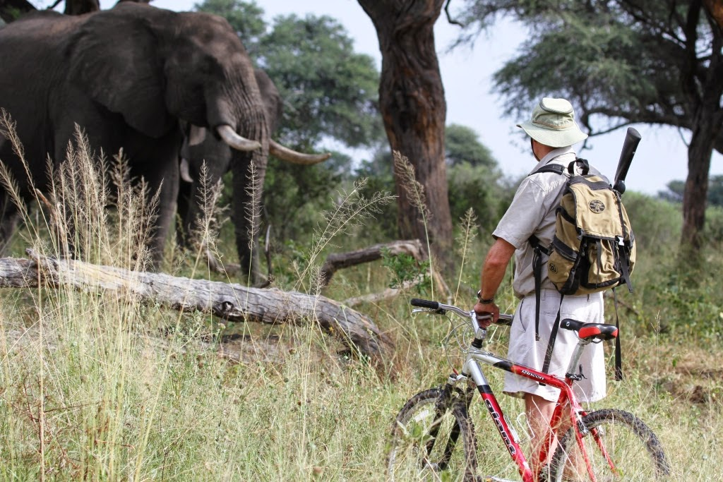 mountain bike safari