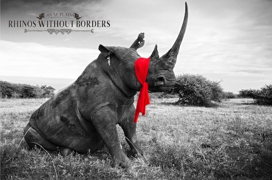 Rhinos without borders, Great Plains Foundation