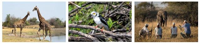 Wilderness Safaris Eco Expert Program