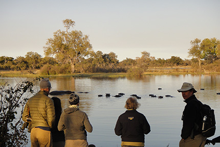 Watching hippos - On Foot Through Botswana | Botswana Safaris & Tours