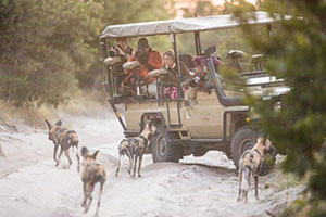 7 Night Khwai Community Area & Chobe National Park Mobile Safari