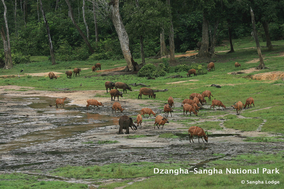 Wildlife at Dzangha-Sangha National Park in Central African Republic