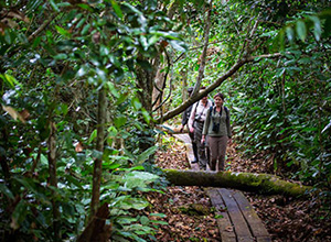 Gorilla Tracking in Odzala-Koukoua National Park, Republic of the Congo (Brazzaville)