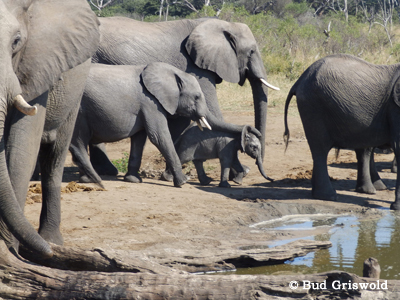 Best of Zimbawe and Botswana, May 12-25 2014 by Bud Griswold