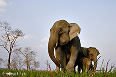 India: Singalila, Kaziranga & Bera, November 10-26 2020 Group Trip