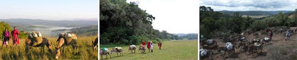 Donkey caravan - Loita Hills, Kenya