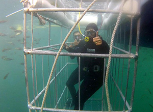Great White Shark Cage Diving, Seal Island - False Bay, South Africa