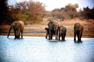 Save the Elephants - Research project based at Tanda Tula