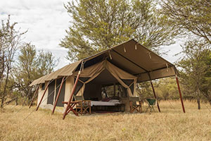 Bologonya Under Canvas, Serengeti