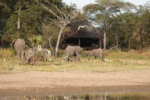 The Selous Safari Camp - Selous Game Reserve - Tanzania Safari Camp