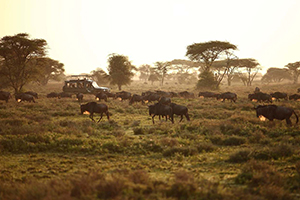 Treasures of Tanzania - Africa Discovery
