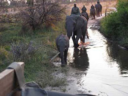 Elephant ride at Abu Camp in Botswana