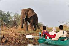 Canoeing Safari in Lower Zambezi