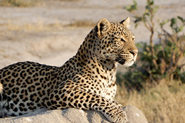 Botswana & Namibia Camp Visits, March 2019 Trip Report