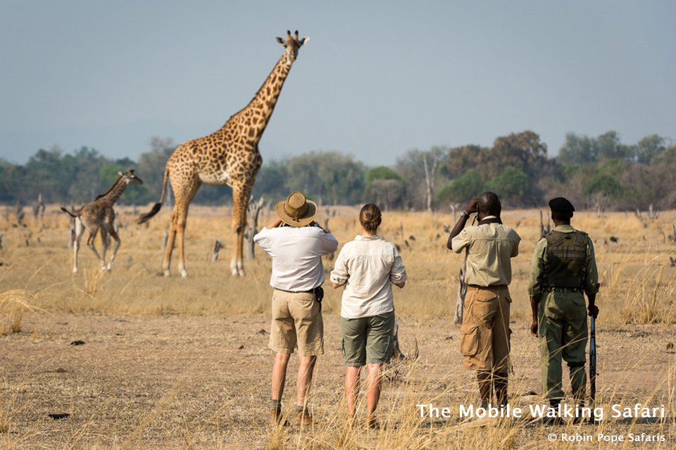 The Mobile Walking Safari in South Luangwa National Park