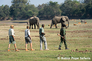 Luangwa Bush Camping and Walking Safari in South Luangwa National Park
