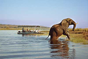 Boat safari - Tongabezi Lodge
