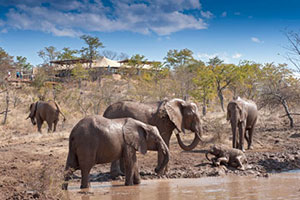 Elephant Camp, Victoria Falls National Park